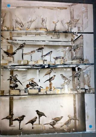 Fåglar, Lars Lerin